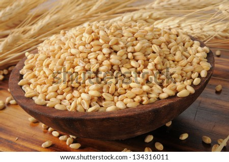 A wooden bowl with fresh whole wheat kernels and wheat stalks in the background #134316011