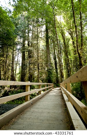 A wooden bridge for hikers and bikers leads over a  small creek in the Olympic National Park, of Washington State.