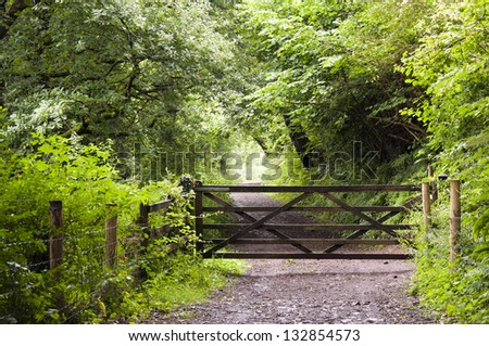 A wooden gate on path leading through a green forest in English countryside, Dartmoor, Devon, England