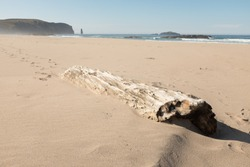 A wooden log lays in the sand on Sandwood Bay beach with a view to the sea stack Am Buachaille, Scotland, UK.