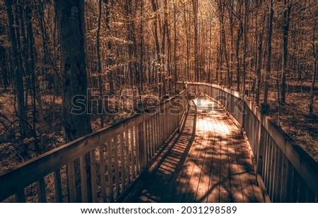 A wooden path in a gloomy forest. Wooden pathway in forest. Forest path way. Dark forest path