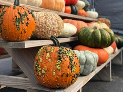 A wooden shelf stacked with various assorted American pumpkins and autumnal gourds.