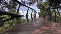 A wooden suspended alley with mesh railings meanders between the treetops. Green branches all around. Blue sky ahead. Botanical Garden in Cape Town. South Africa.