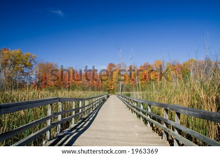 A wooden walkway going over wetlands and toward a line of Maples.