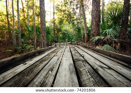 A Wooden Walkway in the Forest