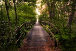 A wooden walkway leads through the forest. Wooden Boardwalk. Nature trail. Natural and Travel Concept.