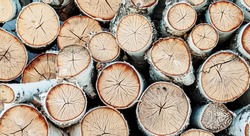 A woodpile of round logs in the countryside.