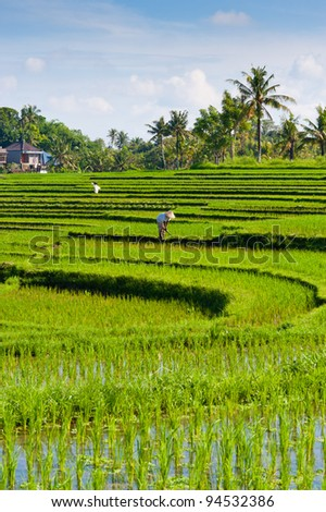 A worker in a rice terrace - Bali