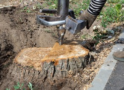 A worker sets up a cutter to drill out an old tree stump