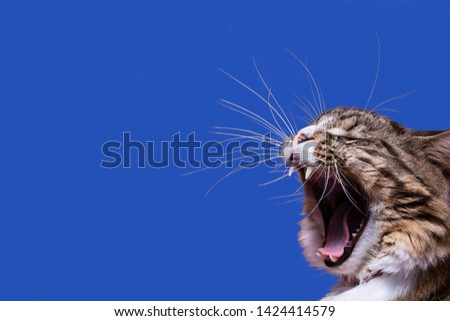 A yelling cat head profile with long whiskers on a blue background #1424414579