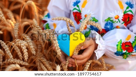 A yellow and blue heart and spikelets of wheat in the hands of a child in an embroidered shirt ( vyshyvanka). Wheat field at sunset.Unity Day, Independence Day of Ukraine, Embroidery Day Foto stock ©