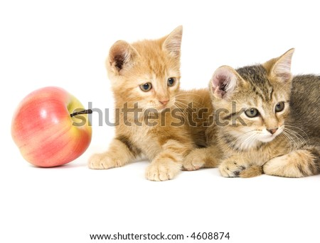 A yellow and gray kitten sits next to an artificial apple on a white background