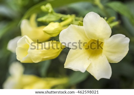 A Yellow Bell Flower Faded By The Summer Ez Canvas