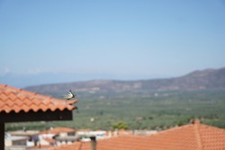 A   yellow butterfly flying,  tiled roof and mountains blurred  background