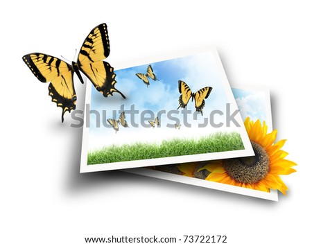 A yellow butterfly is flying out of a photograph picture of a nature scene with clouds and grass. The second photo has a sunflower popping out and growing.