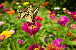 A yellow butterfly is gathering on a pink flower in a field of colorful flowers