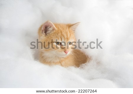 A yellow cat  lays down in a fluffy soft pile of fake white snow