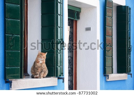 A yellow cat sitting on the window sill at a house in Burano, Italy