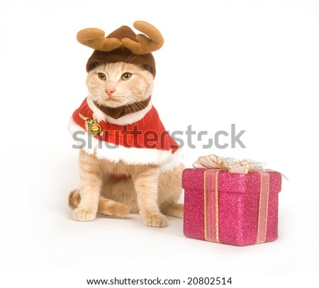 A yellow cat wears a Christmas costume while sitting on a white background