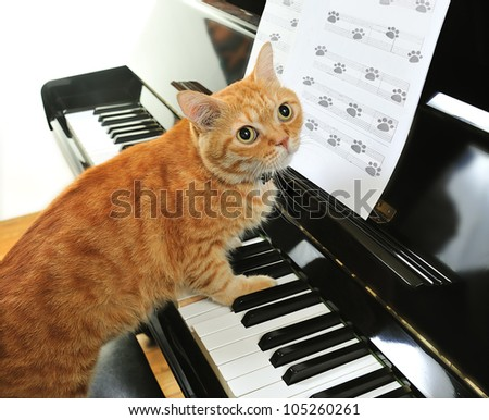 A yellow cute cat playing the piano