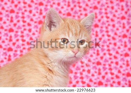 A Yellow Kitten On A Heart Patterned Background Valentines Day Ez