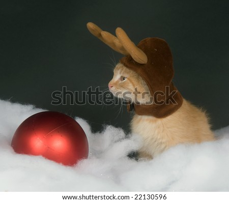 A yellow kitten with reindeer antler hat sitting in fake snow with a red Christmas ornament