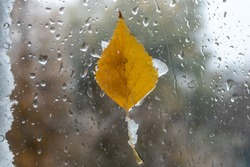 a yellow leaf on a wet window. snow and rain outside the window on an autumn day. texture of rain and snow drops, wet glass. autumn still life, close-up