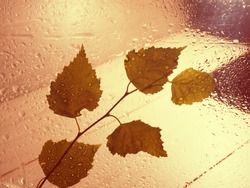 A yellow leaf on a wet window. snow and rain outside the window on an autumn day. texture of rain and snow drops, wet.
