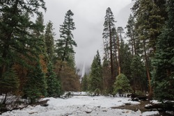 A Yosemite falls surrounded by trees under a cloudy sky in Yosemite National Park, California