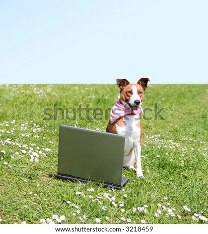 a young beautiful dog is sitting on a meadow with a notebook