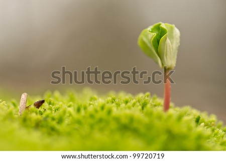stock-photo-a-young-beech-tree-rising-from-the-moss-in-a-forest-in-spring-99720719.jpg