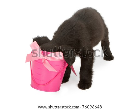 A young black puppy with his head stuck in a pink bucket looking for a surprise treat.