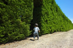 A young child toddler Asian boy (1.5 years old) running into a row of tall hedge tree bush. Concept of childhood fun, outdoor physical activity, entertainment in the garden maze or labyrinth.