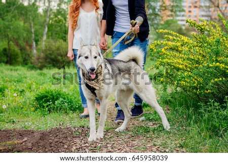 A young couple walking a dog in the spring park #645958039