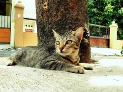 a young domestic cat is stretched out under a tree.
