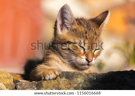 a young dozing cat