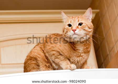 A young ginger tabby cat on the refrigerator