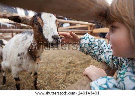 A young girl feeding goat. Close up on hand and goat head. Innsbruck, Austria.