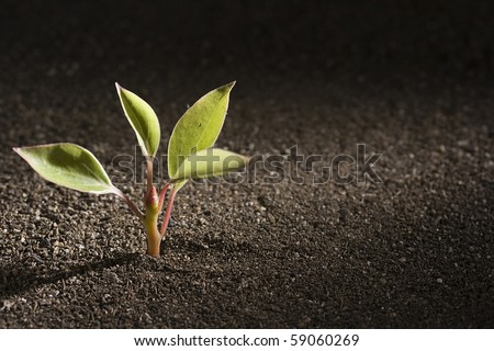 A young green plant growing out of brown soil.