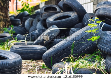 A young green tree makes its way through a bunch of old car tires. A bunch of old tires from used cars. Environmental pollution. Dump tires #1216150999