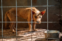 a young hungry puppy stares through her fenced enclosure with an empty food dish in the corner