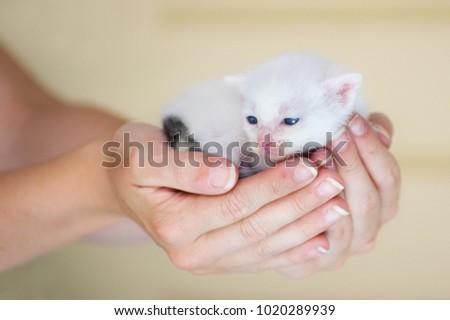 A young kitten #1020289939
