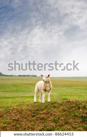 A young lamb standing on a hill, looking towards left frame.  Cloudy sky, green fields and trees in background.  Portrait (vertical) orientation. - stock photo