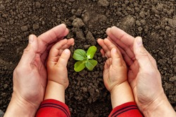 A young man and a child hold a small tree in their hands. Concept of world environment day. Four hands hold a light green tree. Father and son plant a plant