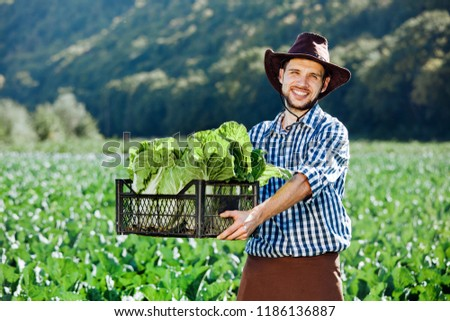 A young man in a hat holding box with ripe crop of cabbage. Happy farmer harvesting on his field. #1186136887