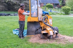 A young man runs a machine called a stump grinder, that grinds a tree stump into a pile of thick, fluffy mulch