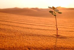 A young plant growing on a dry desert land at sunrise. Sign of hope, new life beginnings, bright future and spring season concept.