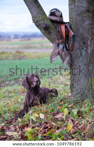 A young, pure blooded dog is lying in the lawn near the tree. On a branch hangs a weapon, a hat with a feather, a prsy is hanging on the lace. A hunting scene. #1049786192