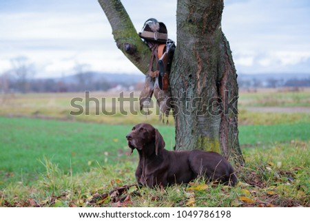 A young, pure blooded dog is lying in the lawn near the tree. On a branch hangs a weapon, a hat with a feather, a prsy is hanging on the lace. A hunting scene. #1049786198