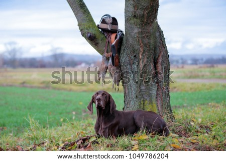 A young, pure blooded dog is lying in the lawn near the tree. On a branch hangs a weapon, a hat with a feather, a prsy is hanging on the lace. A hunting scene. #1049786204